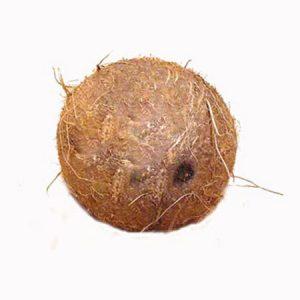 laghu-coconut